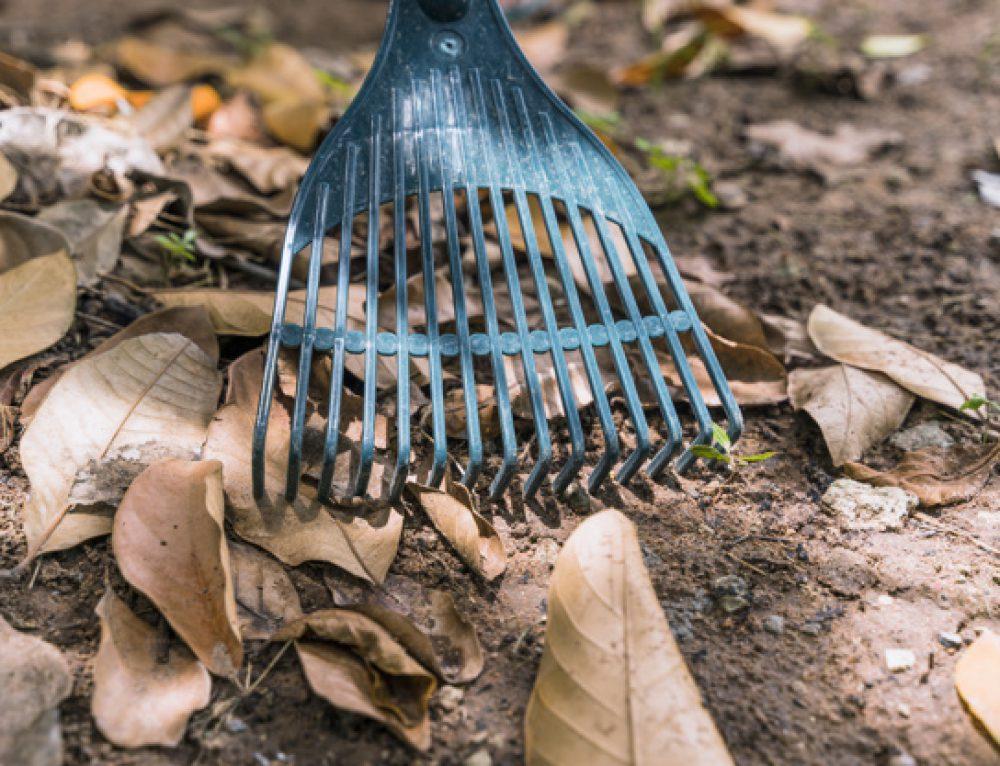 Jakie narzędzia ogrodnicze przydadzą się w ogrodzie?